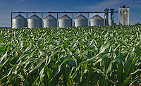 Early corn in a field next to a grain storage bin