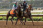 DEL MAR, CA  AUGUST 31:#7 Juliet Foxtrot, ridden by Drayden Van Dyke, in the post parade of the John C. Mabee Stakes (Grade ll) on August 31, 2019 at Del Mar Thoroughbred Club in Del Mar, CA. ( Photo by Casey Phillips/Eclipse Sportswire/CSM)