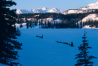 Dog team Finger Lake Checkpoint 1986 Iditarod winter