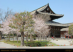 Kondo Golden Hall, Toji East Temple, Kyoto, Japan