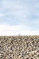 Mesquite Flat Sand Dunes. Death Valley National Park, California.