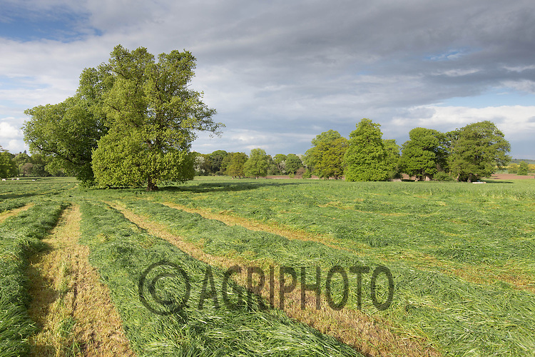 Silage field being mown<br /> Picture Tim Scrivener 07850 303986