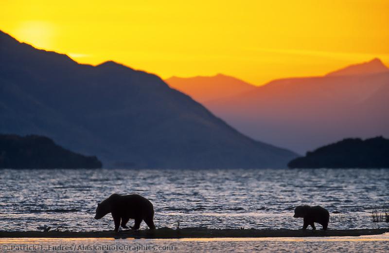 Coastal brown bear and cub walk the beach of Naknek lake at sunrise in Katmai National Park, Alaska.