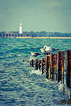 Looking across to Hurst Spit and the Lighthouse with a few gulls and a rusty groyne in the foreground. Vintage tones to complement the rusty groyne.<br />