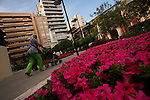 Plaza de Santa Isabel. Murcia.