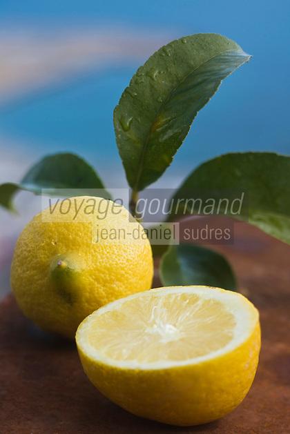 Europe/France/06/Alpes-Maritimes/Menton: Citrons de Menton