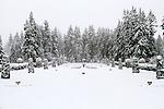 Formal gardens turned to a winter wonderland