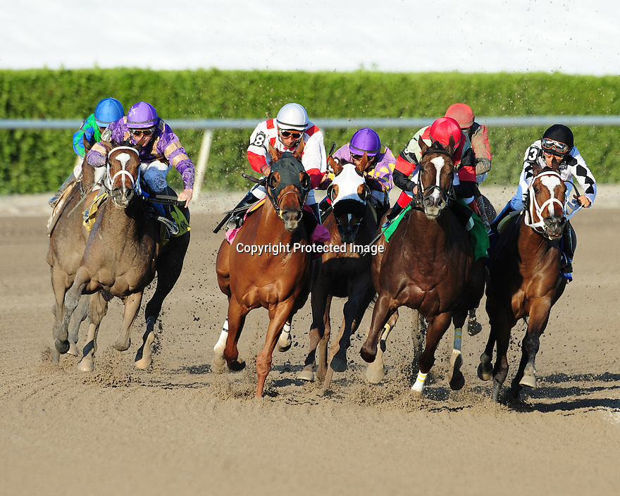 Sacristy(purple silks) captures the Old Hat Stakes at Gulfstream Park on 1-1-12. Ridden by Kent Desormeaux
