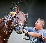 LOUISVILLE, KENTUCKY - MAY 01: Vekoma, trained by George Weaver, gets a bath after exercising in preparation for the Kentucky Derby at Churchill Downs in Louisville, Kentucky on May 1, 2019. Scott Serio/Eclipse Sportswire/CSM