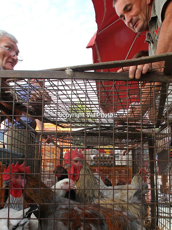 Foto: VidiPhoto..LOUHANS - De boerenmarkt op maandag in het Franse Louhans (Bourgogne). De markten voor specifiek agrarische producten en kleindieren zijn razend populair in Frankrijk. Er wordt vooral gehandeld in kippen, ganzen en kalkoenen. Omdat er van dierenwelzijn vrijwel geen sprake is, worden ze door Europese regelgeving in hun voortbestaan bedreigd. De Franse boeren trekken zich daar echter  weinig van aan en ook de overheden weigeren op te treden tegen het dierenleed op de markten. Duizenden stuks pluimvee staan vaak de hele dag in veel te kleine hokken en zonder eten en drinken in de brandende zon..