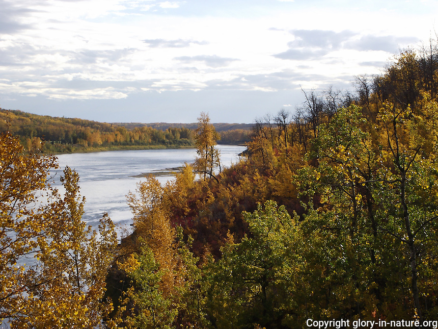 Fall colors from the river valley of the North Saskatchewan.
