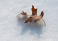Michael McCollum<br /> 1/17/18<br /> Early Snow and a leaf, South Knoxville Tennessee
