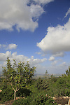 Israel, Lower Galilee, Shkhanya forest