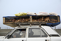 Azerbaijan. Baku Region. Baku.  A man drives his car and carries chicken on the roof. © 2007 Didier Ruef