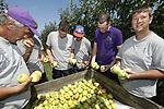 """Foto: VidiPhoto<br /> <br /> RESSEN – Bij fruitteeltbedrijf De Woerdt in Ressen bij Nijmegen worden dinsdag de eerste appels geplukt. De zomerappel Delbare Estival is traditioneel het eerste hardfruit dat wordt geoogst. De eerste plukronde wordt bij De Woerdt traditiegetrouw gedaan door mensen met een verstandelijke handicap. Dit jaar zijn dat cliënten van Gidding Buiten-Zorg, die jaarrond een dag per week al werkzaam zijn op het fruitbedrijf. Volgens eigenaar Wessel van Olst van De Woerdt worden tijdens de eerste plukronde alleen de rijpe appels geplukt en die zijn er nog maar mondjesmaat. """"We werken dus in een rustig tempo, zonder enige druk."""" De kwaliteit van de appels is dit jaar uitstekend, volgens hem, maar van het zomerras hangen er relatief weinig vruchten. De Woerdt heeft een halve hectare Delbare en 20 ha. fruit in totaal, naast een landwinkel."""