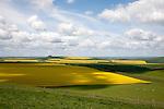 Chalk upland summer farming landscape on the Bishop's Canning down, Marlborough Downs, Wiltshire, England, UK