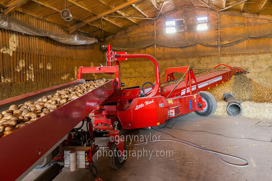 Elevators loading a bulk potato store - Cambridgeshire, September
