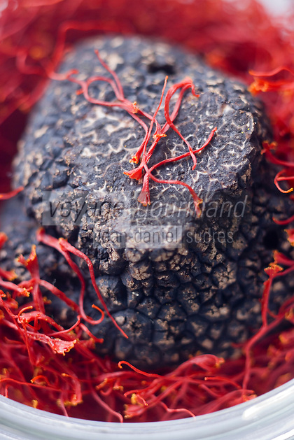 Europe/France/Midi-Pyrénées/46/Lot/Cahors:  Safran du Quercy et Truffe du Périgord ,Tuber Melanoporum  .L'or rouge et le diamant noir // France, Lot, Cahors, Quercy Saffron and Perigord Truffle (Tuber Melanoporum), the Red Gold and Black Diamond