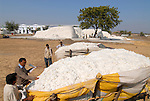 INDIA Madhya Pradesh , biodynamic organic cotton project bioRe in Kasrawad , storage of harvested cotton at ginning factory, farmer supply cotton with bullock carts / INDIEN Madhya Pradesh , Lagerplatz und Entkernungsfabrik der bioRe India , Projekt fuer biodynamischen Anbau von Biobaumwolle in Kasrawad