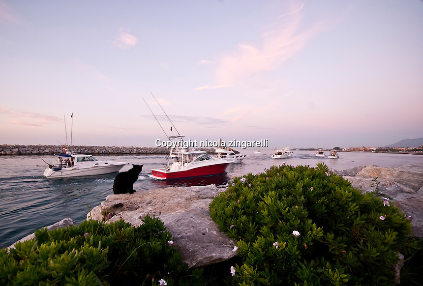 The participants of a fishing tournament are leaving the mouth of Puerto Banús with their sport fishing boats. A black cat is quietly observing the scene while a red boat cruises in front of it. Marbella, Malaga, Spain