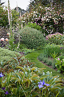 grass lawn path through California perennial cottage garden