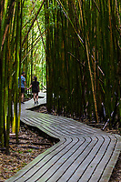 A couple walks along a wooden boardwalk through a bamboo forest, Haleakala National Park, Kipahulu district, Maui.