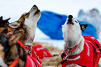 Meredith Mapes dogs howl as Meradith readies to leave the ghost-town checkpoint of Iditarod on Saturday, March 10th during the 2018 Iditarod Sled Dog Race -- Alaska<br /> <br /> Photo by Jeff Schultz/SchultzPhoto.com  (C) 2018  ALL RIGHTS RESERVED