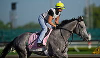 Flashy Gray, trained by Bill Mott, during morning workouts for the Kentucky Derby at Churchill Downs in Louisville, Kentucky on April 30, 2013.