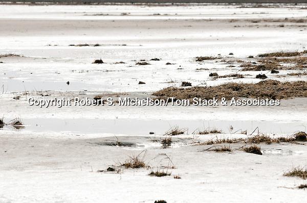 Sand flats, South Beach, Chatham, Massachusetts