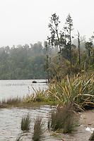 Lake Ianthe with kahikatea trees in mist, South Westland, West Coast, New Zealand