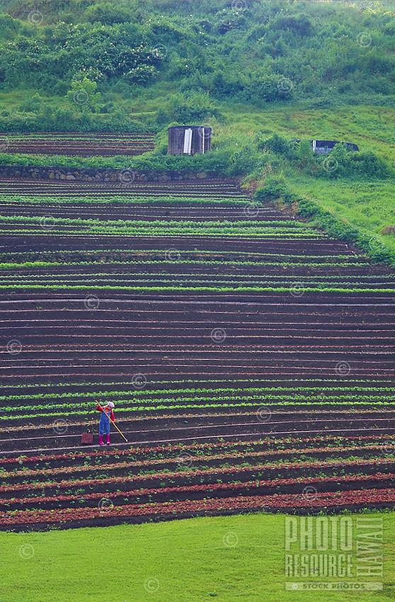 young girl working at organic farm, honaunau, big island