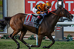 DEL MAR, CA  AUGUST 4: #11 Cambodia, ridden by Drayden Van Dyke, wins the Yellow Ribbon Handicap (Grade ll) on August 4, 2018 at Del Mar Thoroughbred Club in Del Mar, CA.(Photo by Casey Phillips/Eclipse Sportswire/ Getty Images)
