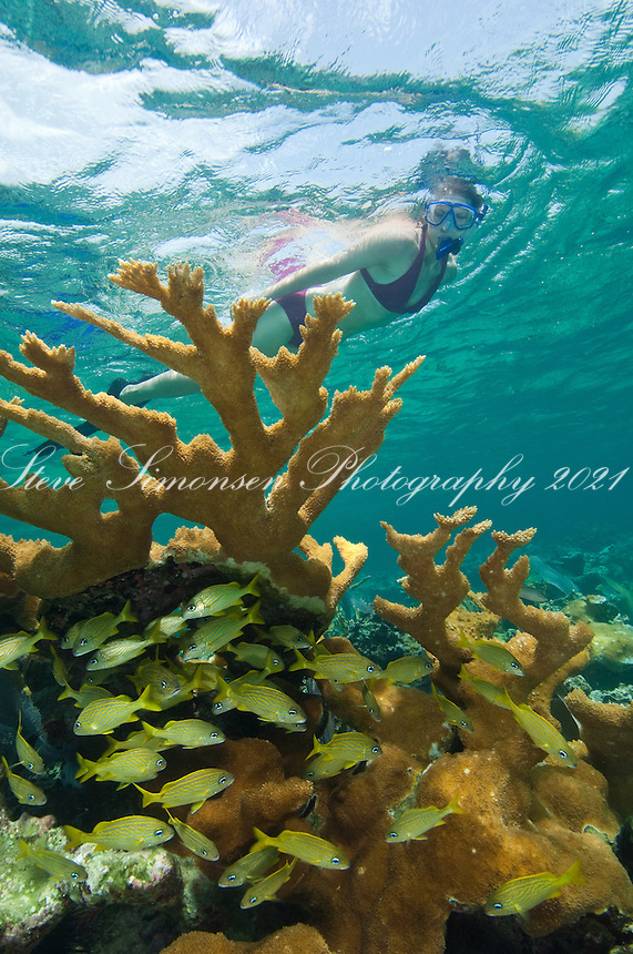 Julia Mozeika snorkeling the reef at .Hawksnest Bay in the Virgin Islands National Park.St. John, U.S. Virgin Islands