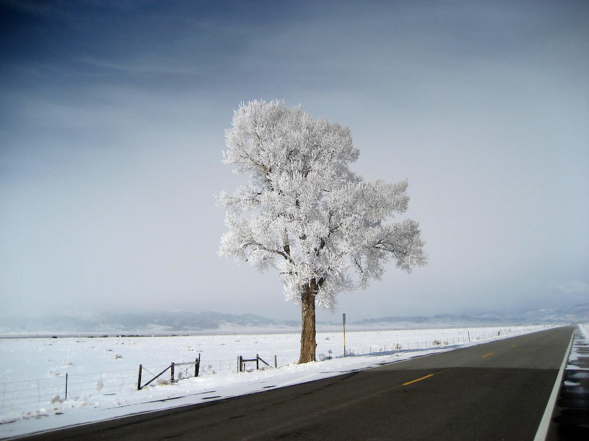 A lone tree along highway 285 near Saguache, Colorado covered in snow in the winter of 2007-2008.