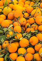 Morocco.  Freshly-picked Oranges, Had Draa Market, Essaouira Province.