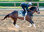 May 15, 2019 : Market King exercises as horses prepare for Preakness Week at Pimlico Race Course in Baltimore, Maryland. Scott Serio/Eclipse Sportswire/CSM