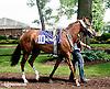 Tanivan before The John W. Rooney Memorial Stakes at Delaware Park on 6/8/13