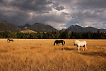 Horses in pasture in Montana.