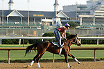 LOUISVILLE, KY -MAY 28: Bravazo, ridden by Danielle Rosier, gallops at Churchill Downs, Louisville, Kentucy in preparation for the Belmont Stakes June 9 in New York. (Photo by Mary M. Meek/Eclipse Sportswire/Getty Images)