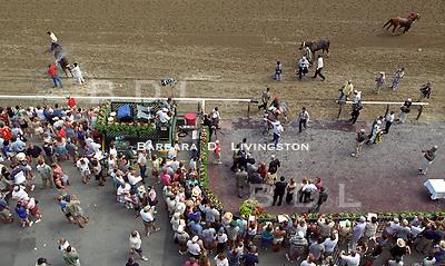 Saratoga, after the race.  1998? Saratoga Race Course, Saratoga Racetrack, beautiful horse racing, Thoroughbred racing, horse, equine, racehorse, morning mood
