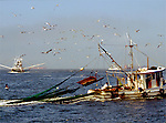Shrimping Boats in the Gulf of Mexico,  outside of Galveston
