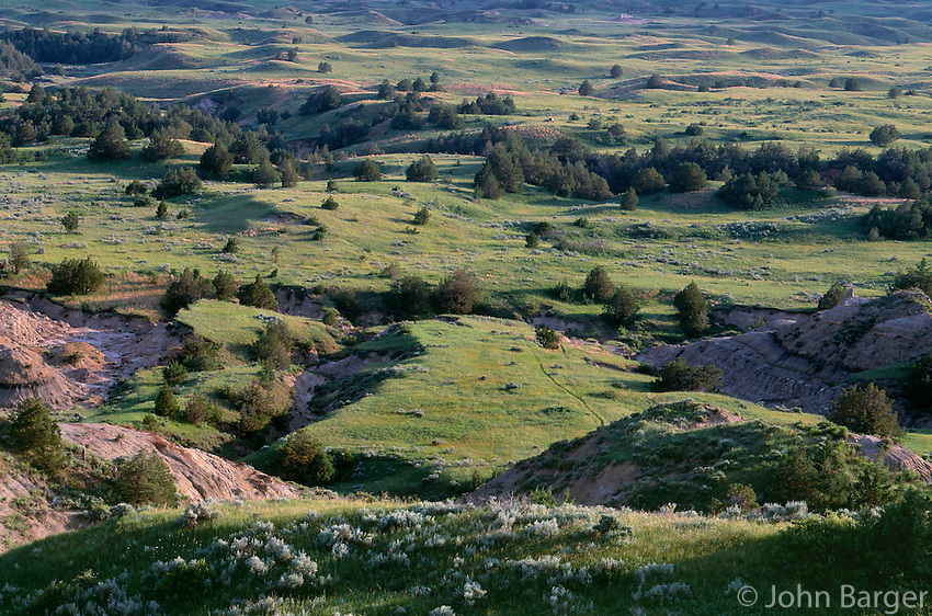 69NDTR_01 - USA, North Dakota, Theodore Roosevelt National Park, Rolling grassland and scattered pine trees, view south from Boicourt Overlook, South Unit.