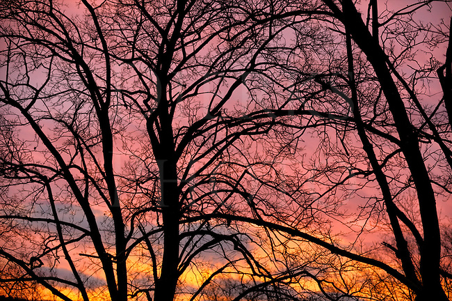 Dramatic morning sky with black silhouetted tree limbs, just as the sun begins to break.