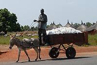MALI Bougouni, transport of fair trade and organic cotton after harvest with donkey cart / MALI Fairtrade und Biobaumwolle Projekt, Transport der Baumwolle vom Feld ins Dorf mit Eselskarren