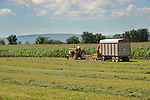 Mennonite farmer and tractor cutting silage. Union County, PA.