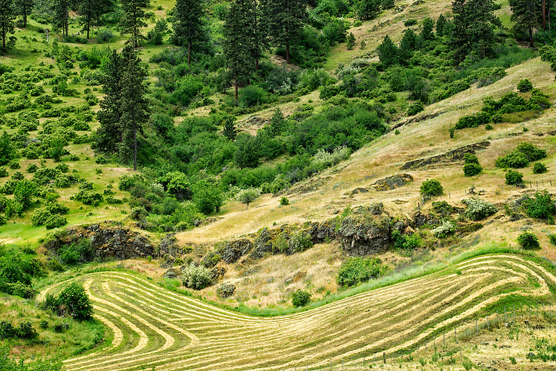 Rows of cut hay. Imnaha Canyon, Oregon.  Hells Canyon National Recreation Area, Oregon