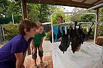 Tolga Bat Hospital volunteer kids play and feed the fruit bats.