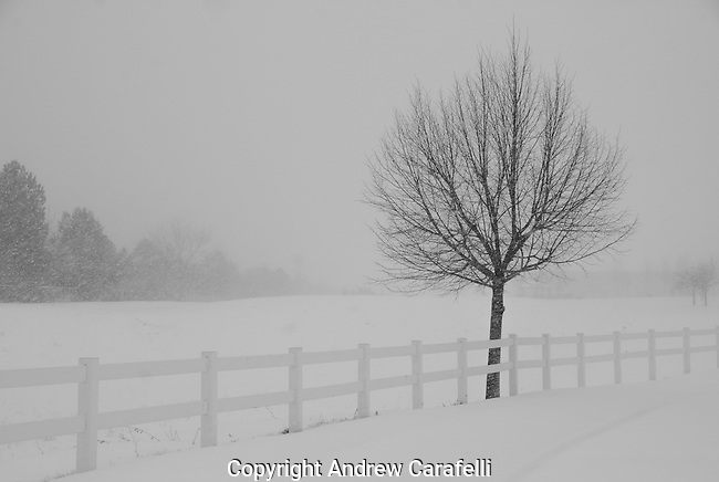 A small tree provides a lonely and cold silhouette during an early morning snow in Colorado. Black & white only.