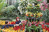 "London, UK. 5 February 2015. Kew Gardens horticulturalists prepare floral displays featuring bromeliads and orchids. ""Alluring Orchids"" is the first festival on the Royal Botanic Gardens' 2015 calendar which showcases thousands of exotic and rare flowers in the Princess of Wales Conservatory from 7 February to 8 March 2015."
