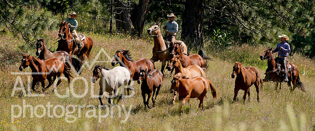 Cowboy Photography Workshop   Erickson Cattle Co. ..Wyatt Hansen and his dad move horses... Photo by Al Golub/Golub Photography